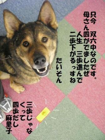 コピー 〜 201011077.JPG